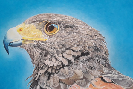 Droichead Arts Centre -            LMETB Robert Ballagh Art Competition